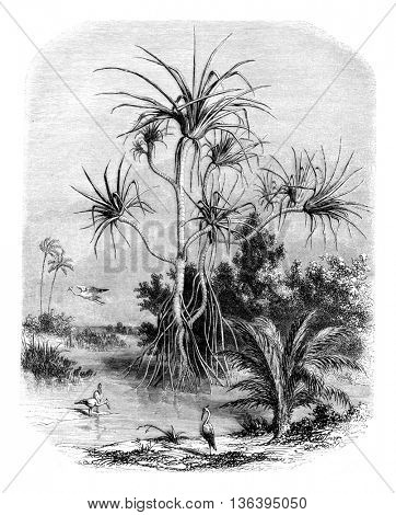 Pandan Island of Prince, vintage engraved illustration. Magasin Pittoresque 1852.