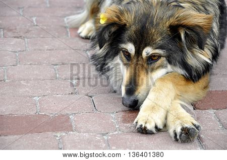 Homeless sadness dog on a roadway paving