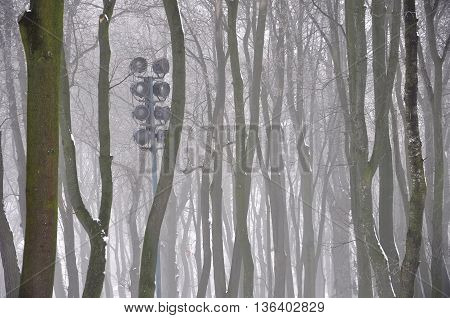 mysterious silhouettes of trees in the fog in winter park