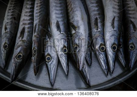 close up arrangement for sale in sea food market of Indo-Pacific King mackerel Spotted mackerel Seerfish