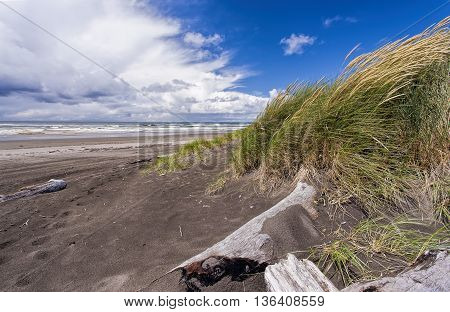 Wind blown grass by the beach at the south end of Ocean Shores Washington.