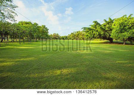 morning light in public park and green grass garden field tree and plant use as natural background