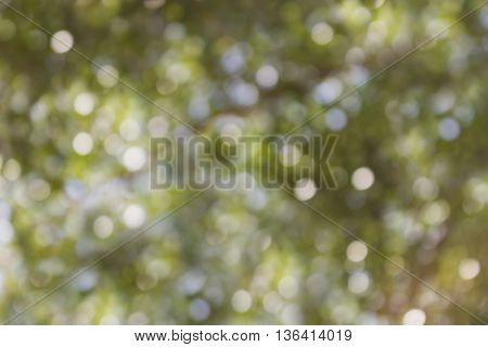 Natural Green And Soft Blue With White Bokeh
