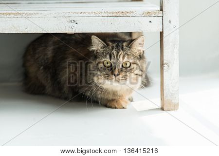 Close up of tabby cat lying under wooden shelf