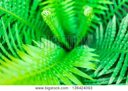 Image of plam leaf green tree background