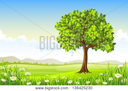 summer landscape with big tree and flowers