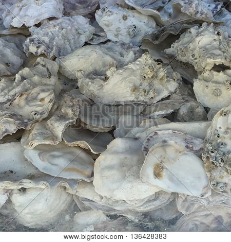 Monochrome colours of oyster shells in down town Vancouver