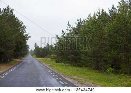 Long, endless road in the middle of a forest on a gloomy day
