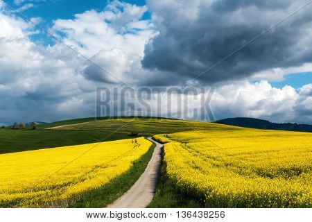 Road to nowhere in rapeseed field at Slovakia
