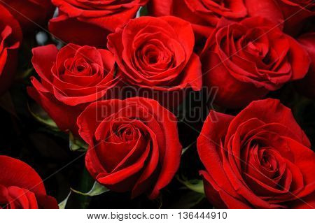 Background image of small fresh red roses . flower texture