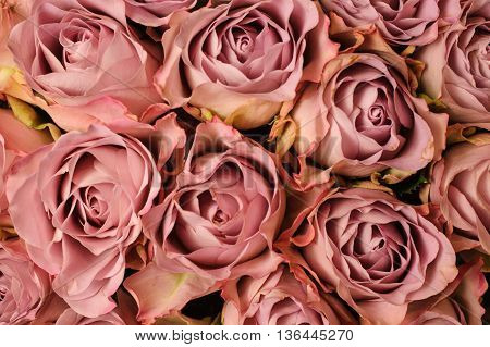 Background image of small fresh beige pink roses . flower texture