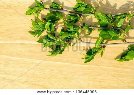 Green Leaves On Wood