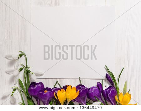 Coner From Crocus And Snowdrops On Wooden Background With Empty Card For Your Text