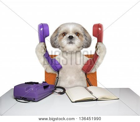 dog is talking over two phones -- isolated on white