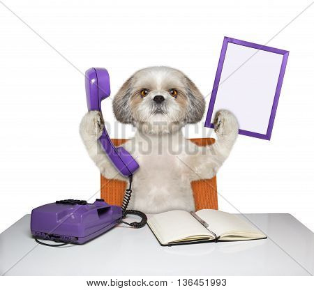 dog keeps phone and frame -- isolated on white