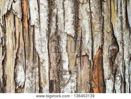 vintage wooden bark texture tree bark background