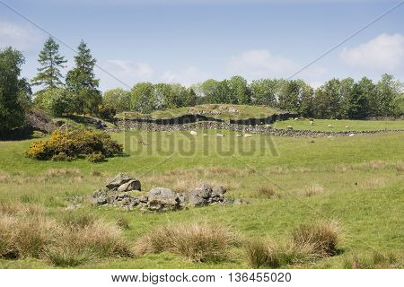 Cumbria field with dry stone walls and sheep