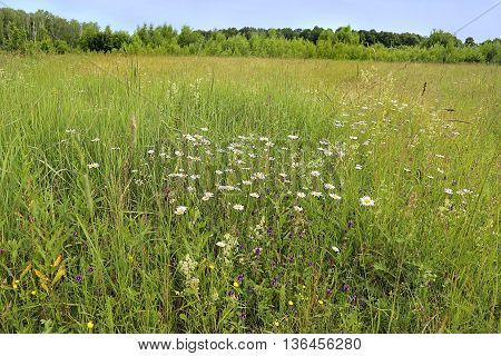 Beautiful summer landscape with wild grass and  flowers