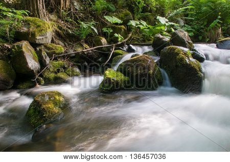 mountain river with stones and green plant