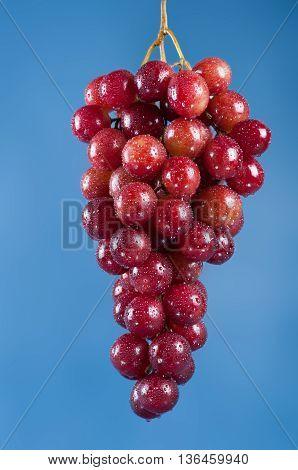 Bunch Of Grapes. Studio Shoot.