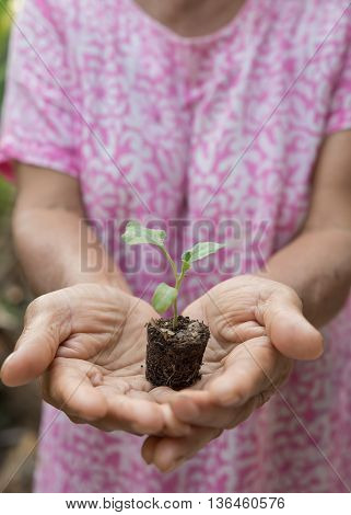 Sapling in hand as of lady old people