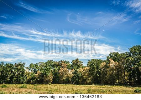 Tree Line And Grass With Blue Cloudy Sky