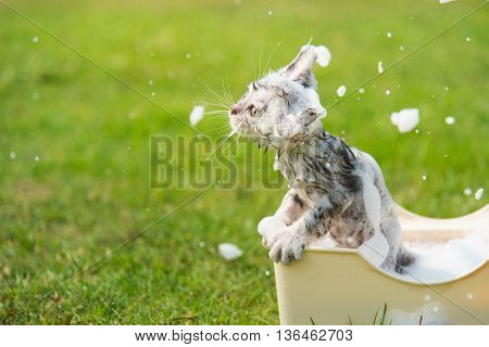 Cute tabby taking a bath in the garden