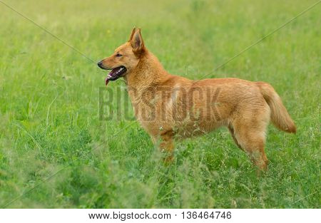 Young mixed breed dog looking for some fun in the spring grass