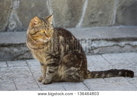 Portrait of guarded city cat sitting outdoors
