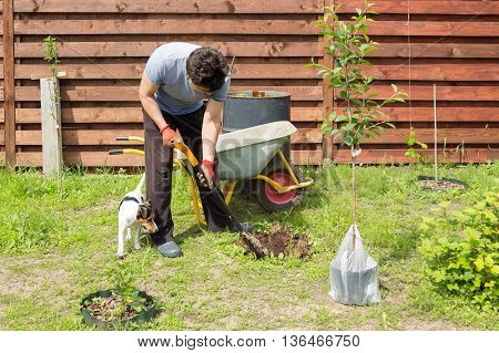 Man With Dog Plants A Cherry In Garden