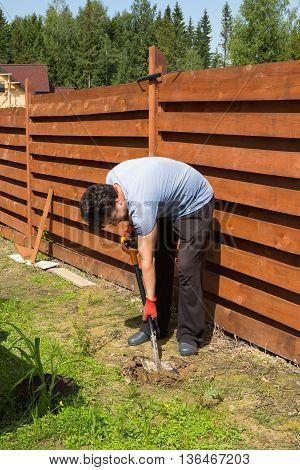 Man Plants Daylily In A Garden
