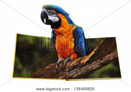 KIEV UKRAINE - April 19 2011:Open book with pictures of animals. Isolated on white background children's book illustration with the image of Ara parrot