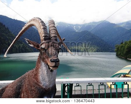 Mountain goat with big horns, a lake in the background