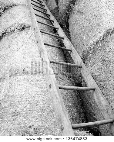 Wood Ladder In The Barn Of The Farm