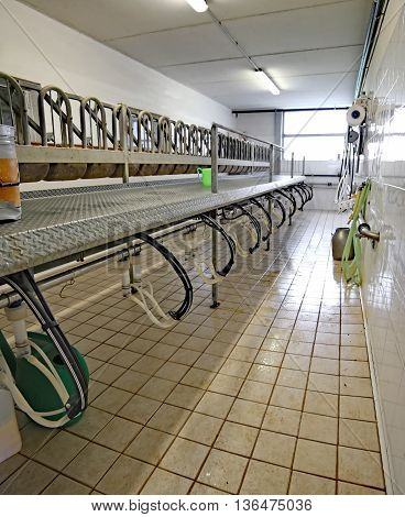 Milking Parlor For Goats And Sheep Of Farm Animals