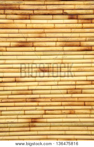 Bamboo Cane Background Texture