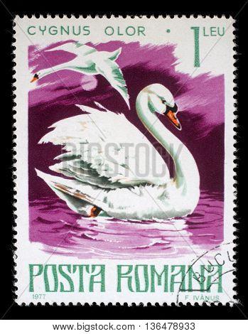 ZAGREB, CROATIA - JULY 18: A stamp printed by Romania, show Mute swan, circa 1977, on July 18, 2012, Zagreb, Croatia