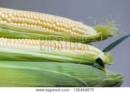 Three raw corn cobs with corn leaves and silk