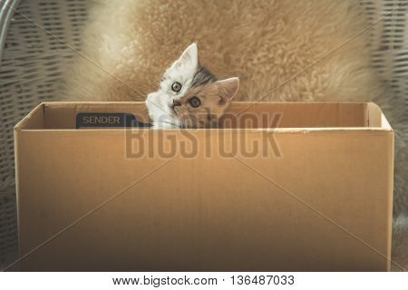 Cute two tabby kittenslooking in a boxvintage filter