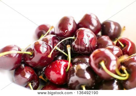big black cherries called Duroni typical from Vignola italy white background