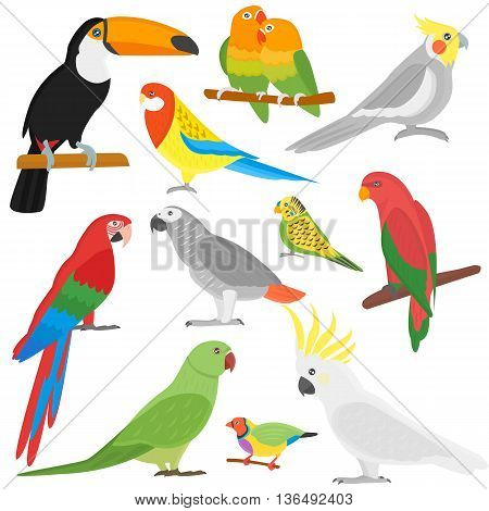 Cartoon parrots set and parrots wild animal birds. Tropical parrots feather zoo birds tropical fauna macaw flying ara. Various cartoon exotic birds set with parrots illustration vector