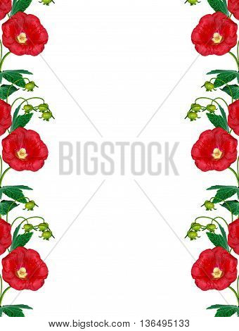 colorful bright flowers mallow isolated on white background