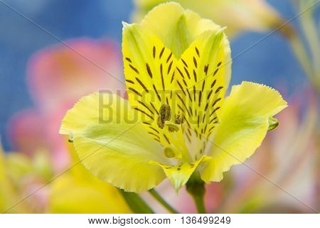 wild Orchid  flowers. close-up plant