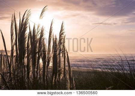Retro Beach Landscape Scenery On Sea Coast