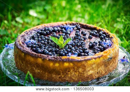 Cake With Cream Cheese And Blueberries