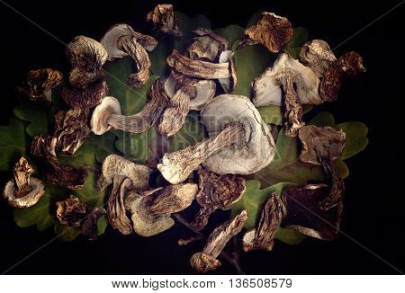 Dried mushrooms on green leaves on a black background