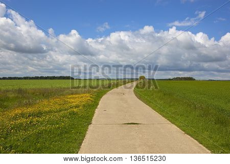 Bridleway With Buttercups