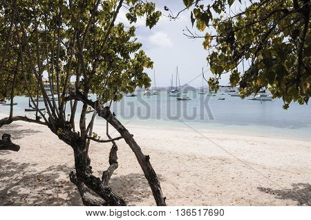 A tree on one of the white beaches of St. John Island.