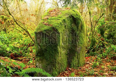 a picture of an exterior Pacific Northwest forest mossy granite boulder in fall