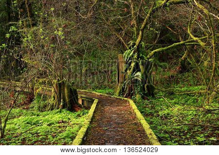 a picture of an exterior Pacific Northwest rainforest boardwalk  hiking trail in fall